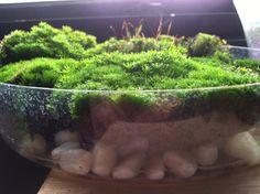 Moss growing terrarium