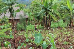 In Kembata, Tembaro, Silte, and Hadiya -- primarily in rural communities where over 90% of the people farm. www.rootsethiopia.org