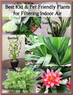(paid link) Indoor plants safe for cats , We get lots and lots of mail asking us what indoor plants are poisonous to cats. Having looked into this it easier to list thos. #catsafehouseplants