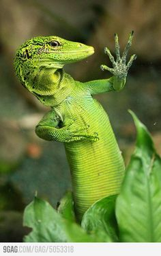 "I'm sorry, but we're only taking ""geckos"" for the GIECO  auditions. ~ Miks' Pics…"