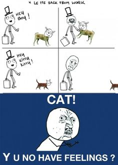 funny-dog-cat-no-feelings