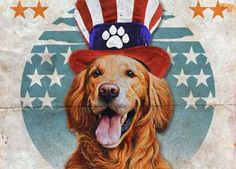 Dog Bless You Makes it Easy to Support the Troops on Memorial Day #cutepets #animalphotography