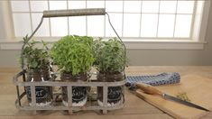 Portable Indoor Herb Garden Fresh herbs are easy to grow and use all around the house. Have some fun by finding containers for an indoor herb garden that remind you to use herbs every day. Kitchen Herbs, Herb Garden In Kitchen, Home And Garden, Kitchen Tips, Mason Jar Herbs, Mason Jar Herb Garden, Mason Jars, Vertical Herb Gardens, Vertical Garden Diy