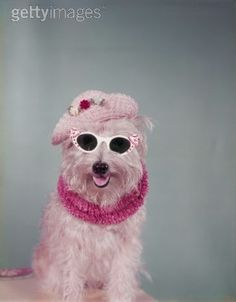 cute! animals-with-glasses