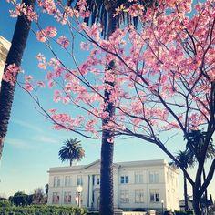 Chapman University campus captured by Moorlach via Instagram, 2012. #CaptureCU #ChapmanU