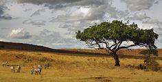 Edublog de Sexto: Pastando en la sabana africana