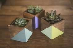 Geometric Painted Wood Planter with Succulent Kit! All natural wood planters with zinc inlay container. Perfect for your home, office, or dorm! Succulents are naturally very low maintenance and add to