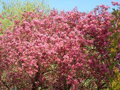 Mein Frühling in Rosé...herrlich