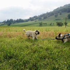 Urlaub mit Hund im Pielachtal im Hotel Steinschalerhof, NÖ   Hundereise Regional, Animals, Hiking, Pet Dogs, Viajes, Animales, Animaux, Animal, Animais