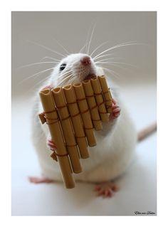 rats <3 tiny pan flutes.