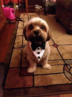 This is Jude! Ready for the event! https://squareup.com/market/miascloset/tuxedo-dog-collar