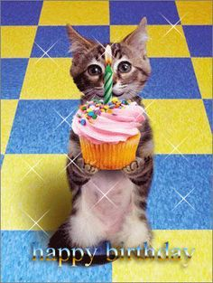Happy Birthday fourpaws (caligrl) cat Pinterest