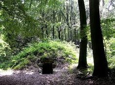 Afbeeldingsresultaat voor domein kwabeek Flora, Trunks, Plants, Drift Wood, Tree Trunks, Plant, Planets