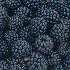 Black raspberries: my favorite fruit. Not to be confused with blackberries -- no comparison. Types Of Berries, Raspberry Plants, Love Flowers, Fresh Fruit, Blackberry, Flower Power, Black Raspberries, Lawn, Planters