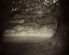 Lovely, Dark & Deep. - Sally Mann, Deep South, 1998