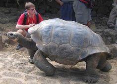 Giant Galapagos Tortoise (by Jukka Otsamo)