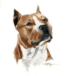 STAFFORDSHIRE Dog Watercolor Painting ART Print Signed by Artist DJ Rogers via Etsy