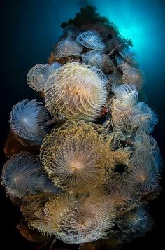 Underwater Fireworks...   Feather Duster Worms colonizing on a mooring line - Gulf of Naples, Italy  Photo Credit ~ Mimmo Roscigno