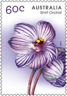 New Shirt Orchid stamp