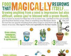 Food that Magically Regrows itself... - Tackk