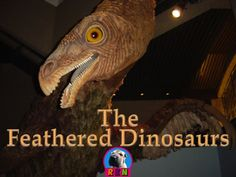 Feathered Dinosaurs Did birds evolve from the dinosaurs? Did dinosaurs have feathers? Could the dinosaurs fly? In this dynamic PPT presentation you will learn the answer to these questions and much more.  More than just a series of informative slides, this packet contains some higher level thinking activities to keep the students engaged. Ryan Nygren (photo attribution - http://www.flickr.com/photos/aarongustafson/