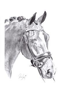 pencil horse drawing Dressage, Chloe Brown, Contemporary Artwork, Pet Portraits, Original Artwork, Pencil, Horses, Drawings, Prints