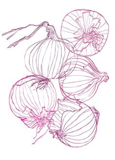 Home Decor Red Onion Outlines printable art instant Onion Drawing, Art Sketches, Art Drawings, Expressive Art, Arte Floral, Grafik Design, Art Plastique, Cute Art, Graphic Illustration