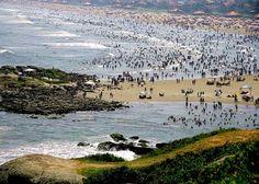 Praia Cibratel, Itanhaém (SP)