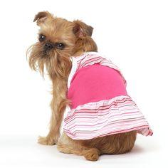 Bubblegum Dog Dress