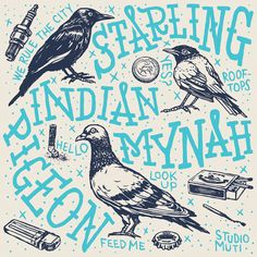City Birds - Studio Muti