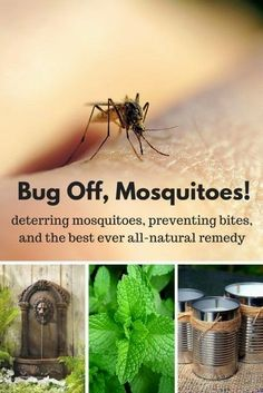 Here are four ways to deter and prevent mosquitoes and one remedy to stop itching bites if the mosquitoes do get you! Mosquitoes may be tiny but they sure can be a big problem. #mosquitoes