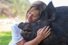 After being rescued from neglect, Edna the pig lives at Where Pigs Fly, a sanctuary in Australia.