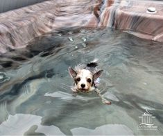 """""""The salt water helps with her allergies, better than any meds."""" The Cannon's dog of Frederick, MD Spa Store, Salt And Water, Allergies, Swimming, Dogs, Animals, Swim, Animales, Animaux"""