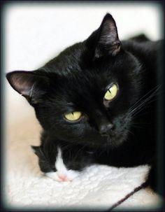 Black cat and kitten