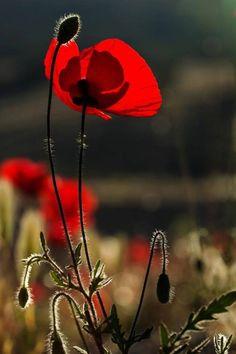 Teniamo quello che vale la pena di tenere e poi, con il fiato della gentilezza, soffiamo via il...