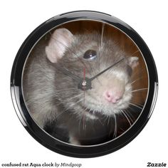 confused rat Aqua clock