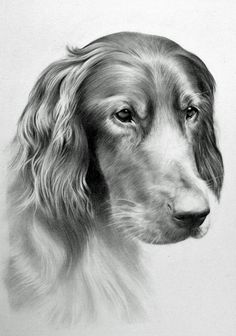 dog, great dane (?) from a4, mechanical pencil 0.5 b My FB fanpage: www.facebook.com/managa.art