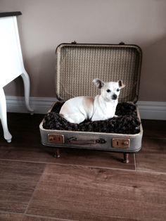 Hondenmand van oude koffer.
