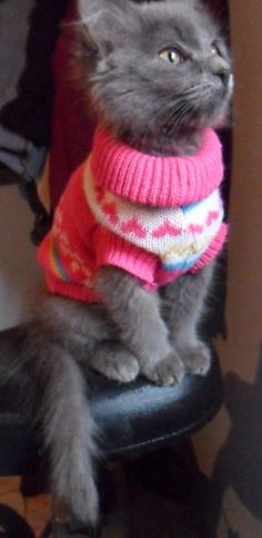 Cats are great. Sweaters are GRRREAT. You know what's even better than cats and sweaters, though? Cute cats wearing sweaters!