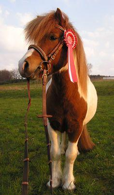 Красивые Лошади, Мини Лошади, Растяпы, Животные, Смешные Фото Животных, Красивые Кошки, Милые Животные, Шетландские Пони
