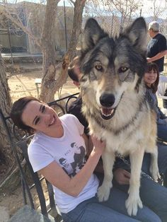 Friend met this spectacular wolf! Beautiful Creatures, Animals Beautiful, Cute Animals, Wolf Spirit, Spirit Animal, Animal Pictures, Funny Pictures, Sleeping Animals, Dangerous Animals