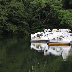 静寂 ボート スワン 井の頭公園