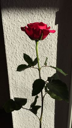 Flower Aesthetic, Red Aesthetic, Flower Pictures, Pretty Pictures, Rad Rose, Rose In Hand, Tumblr Couples, Romantic Photos, Rose Wallpaper