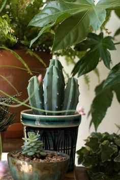 Styling with Cacti