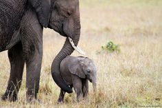 """Urge Retailers to Stop the Sale of Elephant-Skin Shoes 