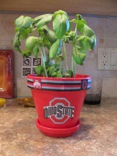 Ohio State pot for plants