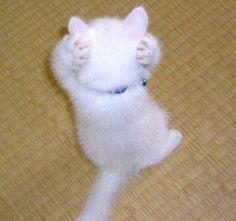 もう、あ、あ、あー… : ネコの可愛さ全開の画像で癒されろ!!! - NAVER まとめ