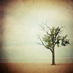 """I love the minimal composition in this print and the cool mood, I LOVE Alicia Bock's work...so inspiring.      """"The Dreaming Tree""""  by AliciaBock, $35.00    #photography #brown #tree"""