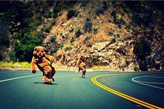 Beavers can even ride!! Have a nice tuesday! #skate #beaver #road #funny #ride #riders #extreme   #extremesports  #skateboard #board   #fun   #funnypics   #funnypictures   #castor   #picoftheday   #photooftheday  #green #yellow #black #brown #white