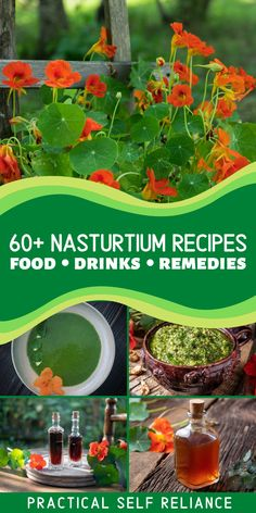 60+ Nasturtium Edible Flower Recipes: Food, Drinks, Salads, Herbal Remedies, & More - Nasturtium recipes can be hard to find, and even those gardeners that know nasturtiums are edible tend to just snack on them right out in the field. Bring these tasty edible flowers (and leaves) indoors with all of these wonderful ways to use nasturtiums. Healing Herbs, Medicinal Herbs, Growing Herbs, Growing Flowers, Natural Medicine, Herbal Medicine, Real Food Recipes, Yummy Food, Herb Gardening